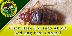 Bed Bug Pest Control and Removal in Central Florida