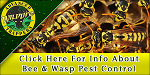 Wasp - Bee Pest Control and Removal in Central Florida
