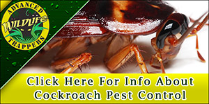 Cockroach - Roach Pest Control and Removal in Central Florida