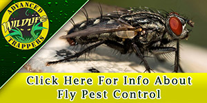 Fly Pest Control, Trapping and Removal in Central Florida