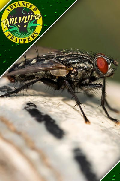 Fly Extermination in Orlando and Central Florida