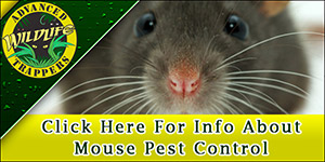 Mouse Pest Control, Trapping and Removal in Central Florida