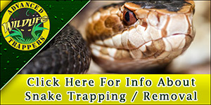 Snake Pest Control, Trapping and Removal in Central Florida