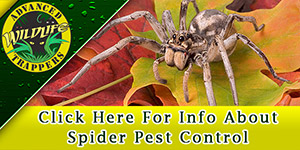 Spider Pest Control, Trapping and Removal in Central Florida